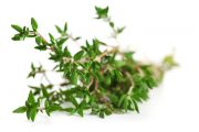 bibit herbal thyme